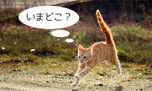 迷子のネコ