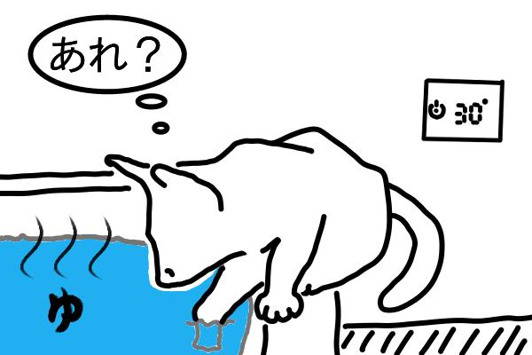 思ったより熱くなかった湯舟に気付く猫